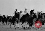 Image of Camel Corps Algeria, 1957, second 8 stock footage video 65675055742