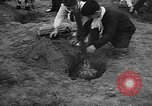 Image of tree plantation Italy, 1958, second 9 stock footage video 65675055752