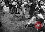Image of tree plantation Italy, 1958, second 10 stock footage video 65675055752