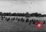 Image of penguins Santa Cruz Province Argentina, 1960, second 9 stock footage video 65675055784