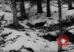 Image of Alpine animals Europe Alps, 1963, second 7 stock footage video 65675055907