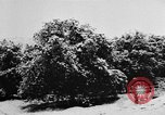 Image of heavy snowfall California United States USA, 1957, second 12 stock footage video 65675055943
