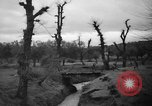Image of French troops Algeria, 1955, second 9 stock footage video 65675056008