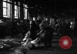 Image of activities at slaughterhouse Germany, 1946, second 10 stock footage video 65675056076