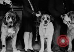 Image of Mid West Dog show Chicago Illinois USA, 1930, second 10 stock footage video 65675056182