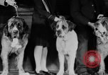 Image of Mid West Dog show Chicago Illinois USA, 1930, second 12 stock footage video 65675056182