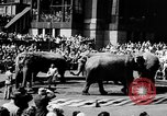Image of circus show New York City USA, 1957, second 8 stock footage video 65675056223