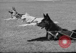 Image of trained dogs Chicago Illinois USA, 1938, second 8 stock footage video 65675056261