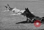 Image of trained dogs Chicago Illinois USA, 1938, second 9 stock footage video 65675056261