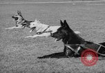 Image of trained dogs Chicago Illinois USA, 1938, second 10 stock footage video 65675056261