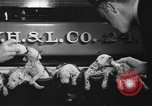 Image of nine mascot pups New York United States USA, 1940, second 11 stock footage video 65675056285