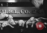 Image of nine mascot pups New York United States USA, 1940, second 12 stock footage video 65675056285