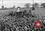 Image of Hungarian revolt Budapest Hungary, 1956, second 6 stock footage video 65675056555