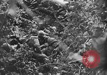 Image of US Army soldiers and Marines in combat World War 2 Pacific Theater, 1944, second 12 stock footage video 65675056746