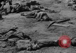Image of US and enemy soldiers killed in World War 2 Pacific Theater, 1944, second 6 stock footage video 65675056749