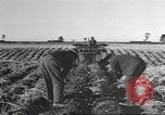 Image of New Zealand supplying food for American soldiers New Zealand, 1945, second 5 stock footage video 65675057553