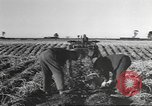 Image of New Zealand supplying food for American soldiers New Zealand, 1945, second 6 stock footage video 65675057553