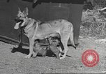 Image of Quartermaster Corps Pacific Theater, 1945, second 7 stock footage video 65675057555