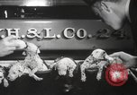 Image of Dalmatian puppies New York United States USA, 1940, second 11 stock footage video 65675057679