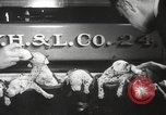 Image of Dalmatian puppies New York United States USA, 1940, second 12 stock footage video 65675057679