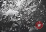 Image of American soldiers Panama, 1942, second 8 stock footage video 65675057756
