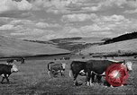 Image of livestock Northwestern United States USA, 1942, second 2 stock footage video 65675057905
