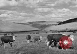 Image of livestock Northwestern United States USA, 1942, second 3 stock footage video 65675057905