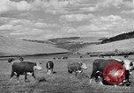 Image of livestock Northwestern United States USA, 1942, second 4 stock footage video 65675057905