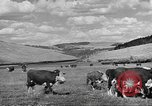 Image of livestock Northwestern United States USA, 1942, second 5 stock footage video 65675057905