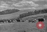 Image of livestock Northwestern United States USA, 1942, second 11 stock footage video 65675057905