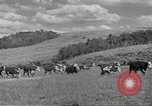 Image of livestock Northwestern United States USA, 1942, second 12 stock footage video 65675057905