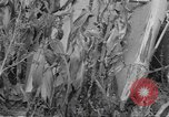 Image of corn industry Midwest United States USA, 1942, second 4 stock footage video 65675057910
