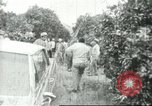 Image of Mexican American orange pickers Farmersville California USA, 1968, second 1 stock footage video 65675058040