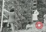 Image of Mexican American orange pickers Farmersville California USA, 1968, second 11 stock footage video 65675058041