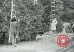 Image of Mexican American orange pickers Farmersville California USA, 1968, second 12 stock footage video 65675058041