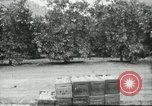 Image of Mexican American orange pickers Farmersville California USA, 1968, second 1 stock footage video 65675058042