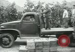 Image of Mexican American orange pickers Farmersville California USA, 1968, second 4 stock footage video 65675058042