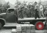 Image of Mexican American orange pickers Farmersville California USA, 1968, second 5 stock footage video 65675058042