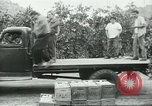 Image of Mexican American orange pickers Farmersville California USA, 1968, second 7 stock footage video 65675058042