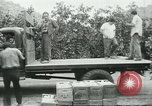 Image of Mexican American orange pickers Farmersville California USA, 1968, second 8 stock footage video 65675058042