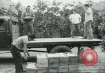 Image of Mexican American orange pickers Farmersville California USA, 1968, second 10 stock footage video 65675058042
