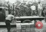 Image of Mexican American orange pickers Farmersville California USA, 1968, second 11 stock footage video 65675058042