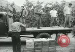 Image of Mexican American orange pickers Farmersville California USA, 1968, second 12 stock footage video 65675058042
