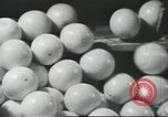 Image of Packaging oranges for sale Farmersville California USA, 1968, second 2 stock footage video 65675058043