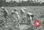Image of cotton farming Chula Georgia USA, 1931, second 10 stock footage video 65675058053