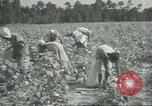 Image of cotton farming Chula Georgia USA, 1931, second 11 stock footage video 65675058053