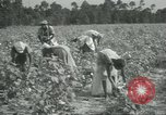 Image of cotton farming Chula Georgia USA, 1931, second 12 stock footage video 65675058053