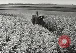 Image of agriculture activities United States USA, 1945, second 7 stock footage video 65675058167