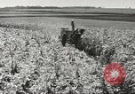 Image of agriculture activities United States USA, 1945, second 9 stock footage video 65675058167