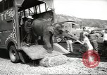 Image of elephant New York United States USA, 1958, second 7 stock footage video 65675058264